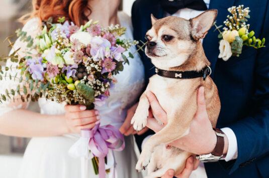 Seu pet na hora do sim? Veja como incluir animais no seu casamento.